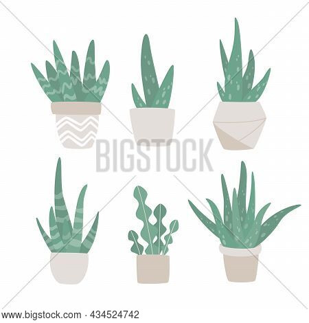 Hand Drawn Set Of Cute Aloe Vera And Succulent Plants Growing In Pots. Aloe In Pots. Houseplant Pot