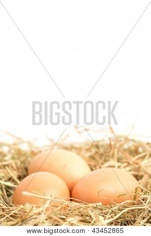 Three eggs nestled in straw nest with copy space
