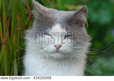 Cute Domestic Animals In The Garden. Outdoor Atmospheric Lifestyle Cat Photo.cute Little Cat