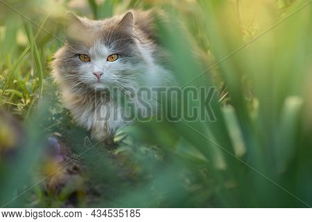 Cat Is Lying In The Garden. Pretty Happy Cat Lying On A Plants Background. Beautiful Cat In The Spri