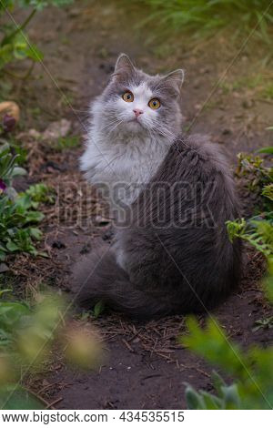 Kitten Cat In The Garden With Flowers