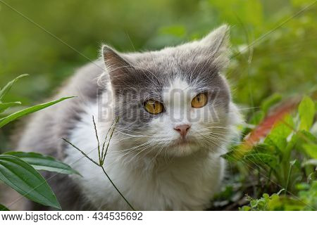 Short Hair Cat Photo In The Summer Garden In The Evening. Portrait Of A Cute Cat Sitting In Sunny Ga