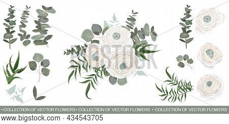 Floral Vector Collection. White Roses, Ranunculus, Eucalyptus, Green Plants And Leaves. Flower Compo