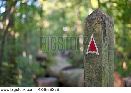 Color Arrow, Direction Sign On The Trail Path. Forest Park At Autumn