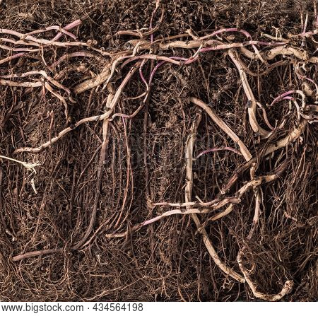 Close up cross section of soil under ground with tree roots. Earth details and background.