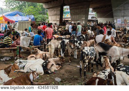 Kolkata, West Bengal, India - 11th August 2019 : Goats For Sale In Open Market During