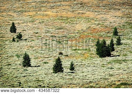 Several small pine trees on mountainside forest with lone isolated tree