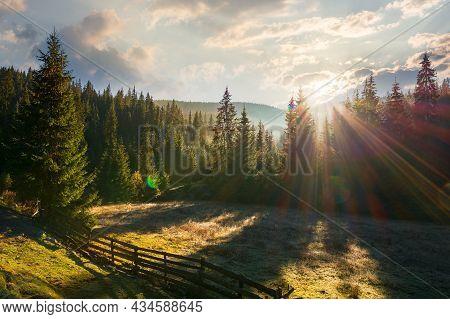 Coniferous Forest At Sunrise. Beautiful Nature Scenery Of Apuseni Natural Park, Romania. Sunny Outdo