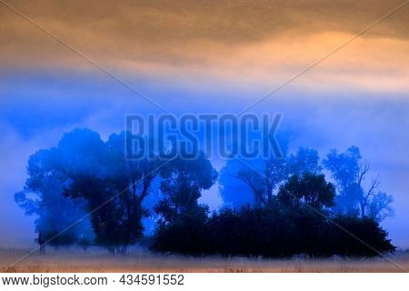 Scenic view of foggy valley meadow with trees and morning sunlight