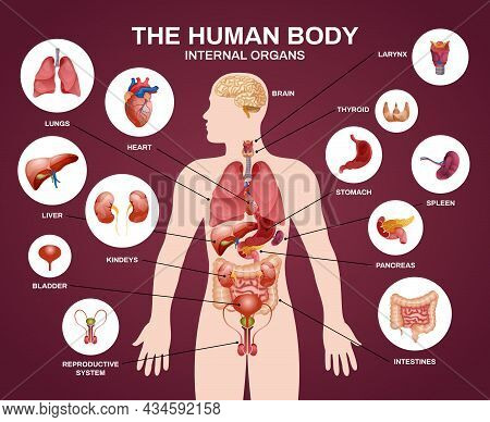 Internal Human Organs Silhouette Composition With Human Body Internal Organs Headline And Descriptio