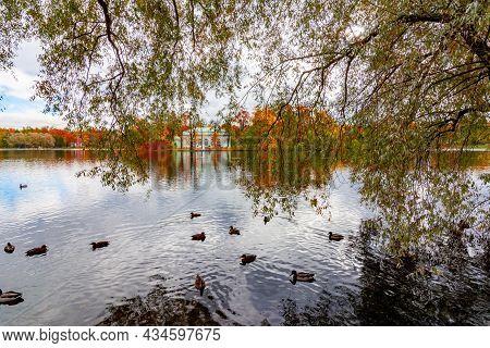 Grand Pond Of Catherine Park In Autumn, Pushkin (tsarskoe Selo), Saint Petersburg, Russia