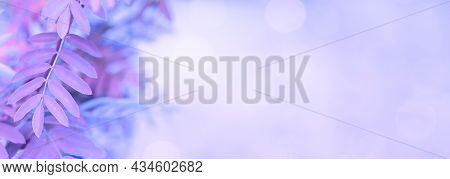 Blurred Purple Leaves On Purple Background With Soft Focus And Copy Space, Beautiful Banner