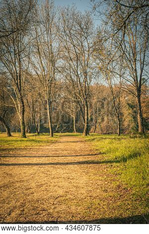 Road (trail, Pathway, Footpath) In Autumn Forest. Autumn Trail Hiking Road In Green Forest Morning F