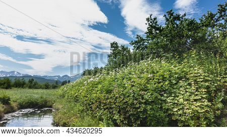 A Natural Hot Spring In A Green Meadow. There Are Bubbles And Foam On The Water. Around Lush Grass,