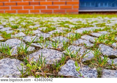 Green Grass Grows From The Tile Or Path