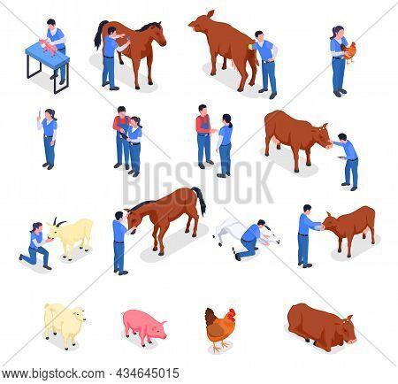 Farm Animals Veterinary Colored Isometric Icon Set With Vaccination Animal Care Health Checks And Va