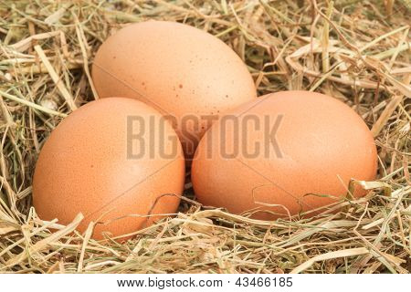 Three eggs nestled together in straw nest
