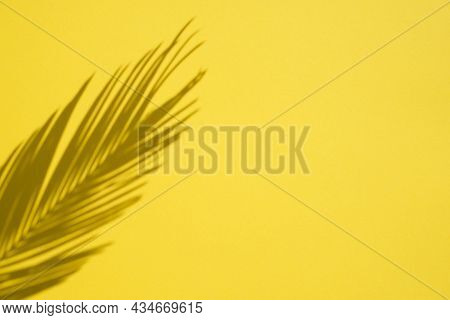 Trending Concept In Natural Materials With Palm Shadow On Yellow Background. Presentation With Dayli