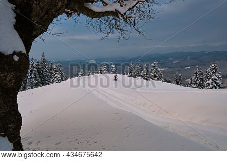 Moody Landscape With Footpath Tracks And Bare Dark Trees Covered With Fresh Fallen Snow In Winter Mo