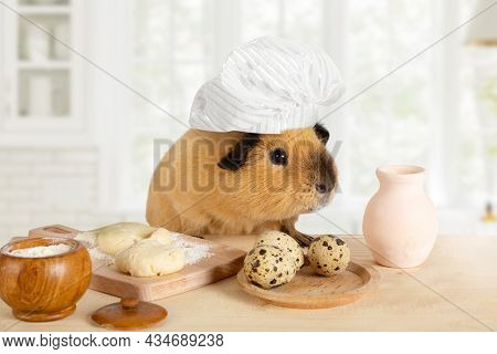 Amusing Guinea Pig In A Chef's Hat Cooks Food In The Kitchen
