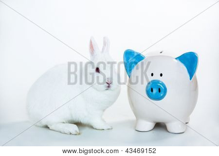 White bunny sitting beside blue and white piggy bank on white background