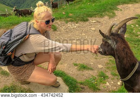 Tourist Backpacker Woman Playing With A Goat In Monte Generoso Peak. Top Of Mendrisio District Of Sw