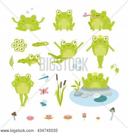 Cute Happy Toad Or Frog Character Flat Vector Illustrations Set. Funny Drawings Of Eggs, Tadpole And