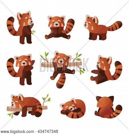 Cute Red Panda Cartoon Set. Vector Illustration Of Chinese Animal Character From Wild Forest Or Pet