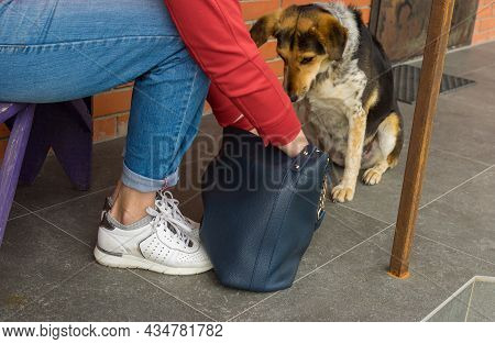 Mixed-breed Female Dog Doing Master's Bag Silent Examination When Woman Return Home