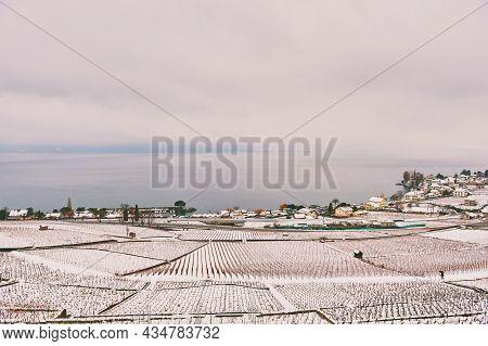 Winter Landscape Of Lavaux Vineyards Under Snow And Lake Geneva, Canton Of Vaud, Switzerland