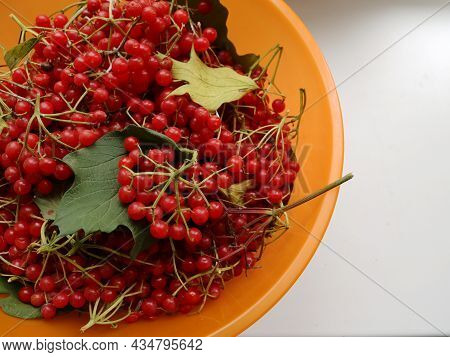 Autumn Background With A Cup Of Viburnum Berries With Leaves And Twigs With Copy Space On The Right,
