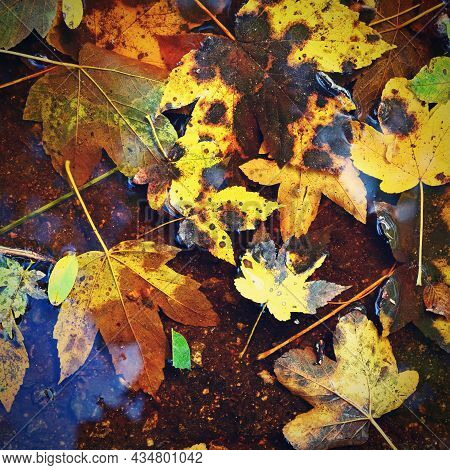 Autumn Background. Beautiful Colorful Leaves In Water With The Sun. Seasonal Concept Outdoors In Aut