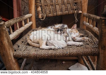 Three White Stray Cats Resting On Wicker Chair Cuddle Together