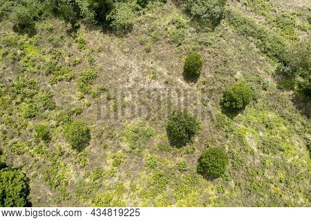 Green Bush And Shrub Landscape Top Down Aerial View Showing Texture And Abstract