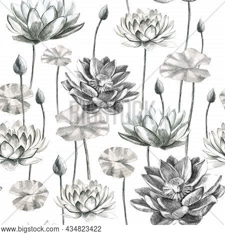Lotuses Pattern. Flowers And Lotus Leaves In Pencil. Water Lily. Pencil Drawing Of Leaf Stems And Wa