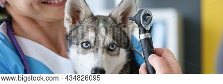 Veterinarian Examining Sore Ear Of Dog Using Otoscope In Clinic