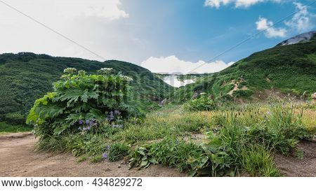 A Dirt Path Winds Through The Valley. Green Grass And Wildflowers Grow On The Roadsides. Tiny Figure