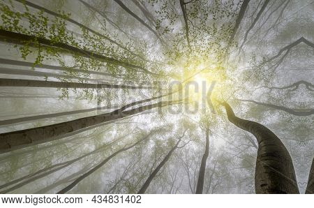 Low Angle View Of A Forest, Treetop In Winter, Low Angle View Of Several Trees In The Forest