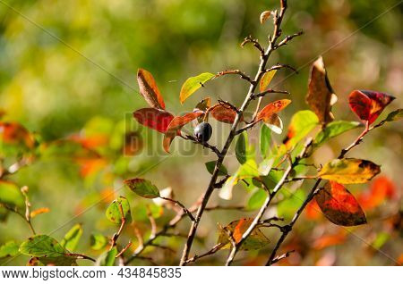 Orange, Green And Burgundy Leaves On Green Blurred Background With Bokeh. Autumn Concept. Autumn Fol