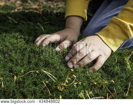 Little Kid Explores Nature. Child Is Touching Fluffy Moss In Summer Forest. Developing Fine Motor Sk