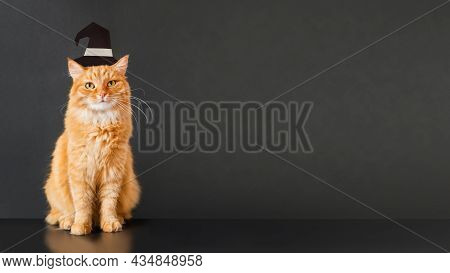 Cute Ginger Cat In Witch Hat. Fluffy Pet Sits On Black Background. Domestic Animal Is Ready To Celeb