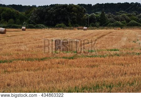 Panorama Of The Field. Field With Mowed Grass. Strips Of Cut Grass In The Field. View Of The Forest