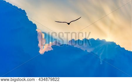 A Single Bird Flying Above The Clouds Towards The Light Of The Divine Sun Rays