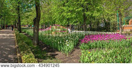 Tulip Alley In The Kropyvnytskyi Arboretum, Ukraine
