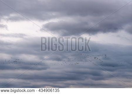Birds In Flight Formation Making Their Annual Seasonal Migration Against Gray Autumn Sky. Wild Bird