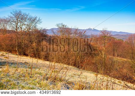 Countryside Landscape In Autumn On A Sunny Morning. Beautiful Outdoor Nature Scenery With Trees In F