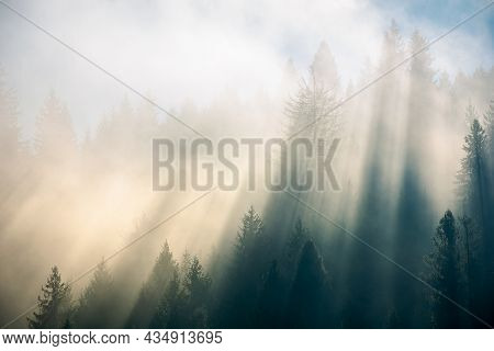 Sunlight Through Fog And Forest. Coniferous Trees On The Hill. Wonderful Autumn Nature Background In