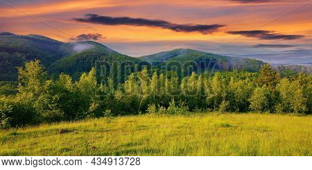 Forest On The Grassy Meadow In The Forenoon. Beautiful Rural Landscape In Summer. Mist Spreads From