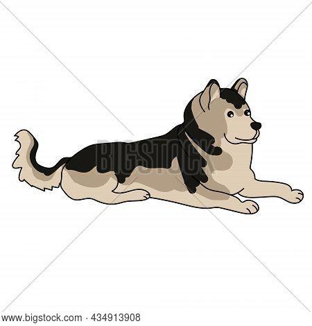 Dog Breed Alaskan Malamute, Loyal Pet With Fluffy Coat Vector Illustration