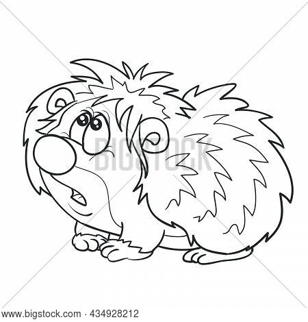 Sketch, Cute Hedgehog Character Looking Up Puzzled, Coloring Book, Cartoon Illustration, Isolated Ob